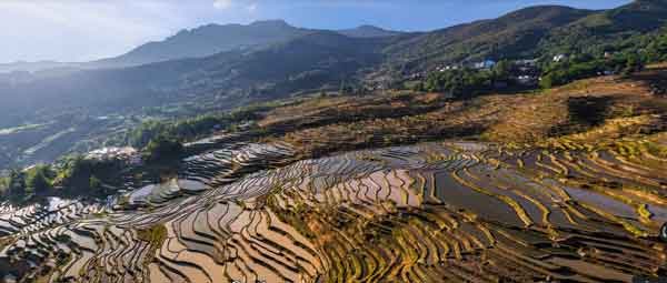 Zhongdian rice fields - Yunnan, China